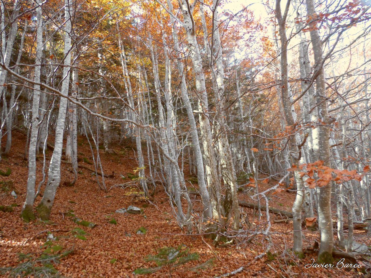 084-alfombra-de-hojas