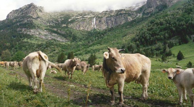 El uso de los drones en la ganadería, este lunes en 'Objetivo'
